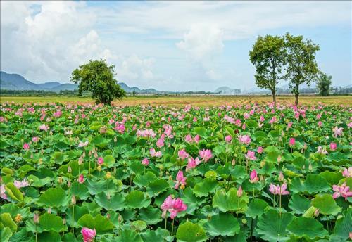 Trần Nam