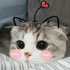 Mèo Nhỏ